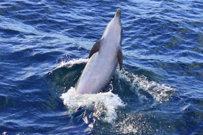 dolphin watching 01