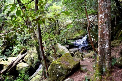 Bushwalking 2