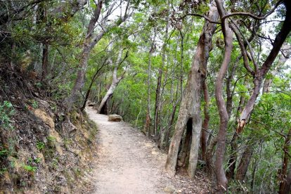 Bushwalking 3