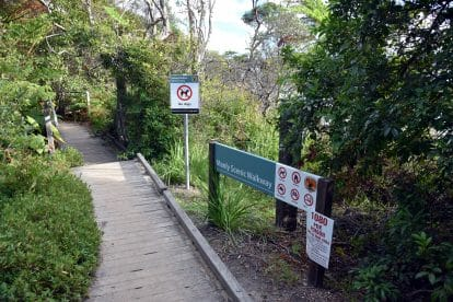 Bushwalking 4