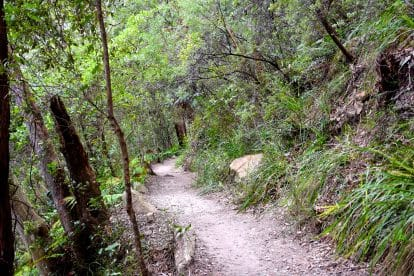 Bushwalking 6