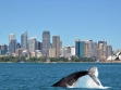 Whale Watching 10
