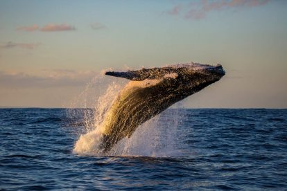 Whale Watching 11