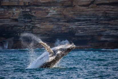 Whale Watching 7