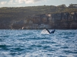 Whale Watching 8