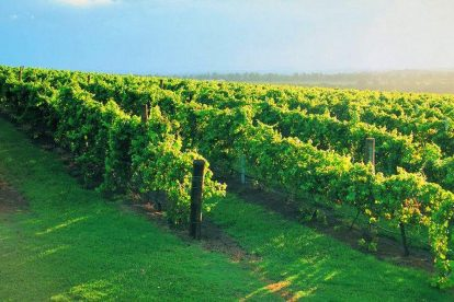 winery tours 07