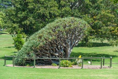 royal botanic gardens 06