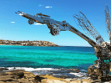 Sculpture by the Sea 9